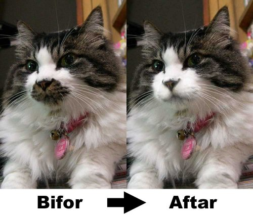 persian cats and urinary problems