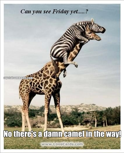 No there's a damn camel in the way!