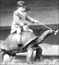 boy riding turtle - tourtise