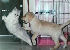 cat fighting with dog
