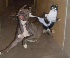 cat kicks dog in the face