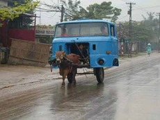 horse pulling truck front end