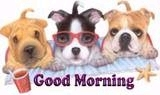 good morning dogs