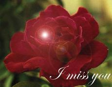 i miss you rose