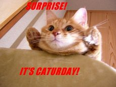 surprise it's caturday saturday