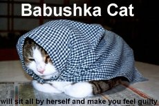 babushka cat will sit all by herself and make you feel guilty