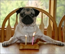dog with birthday bone