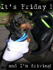 it's friday and i'm driving dog