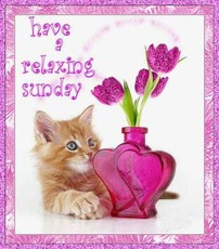have a relaxing sunday kitten flowers