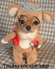 thanks for the add puppy costume