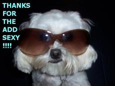 thanks for the add sexy dog with sunglasses