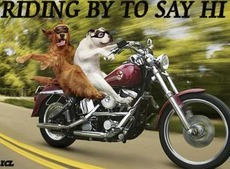 riding by to say hi