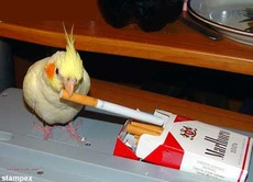 bird with cigarette