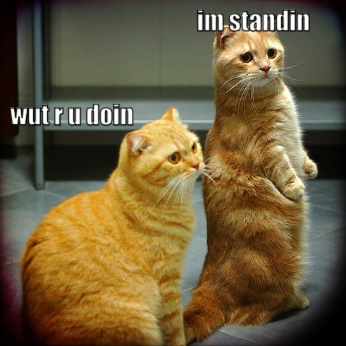 what are you doing? i'm standing