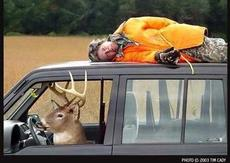 deer driving with dead man on the roof