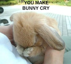 you make bunny cry