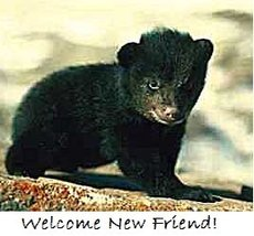 baby bear - welcome new friend