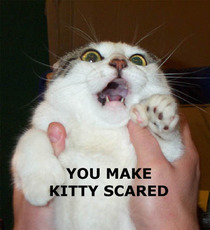 you make kitty scared