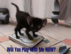 will you play with me now kitten on hard drive