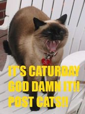 it's caturday god damn it post cats saturday