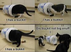 i have a bucket