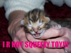 i am not a squeezy toy