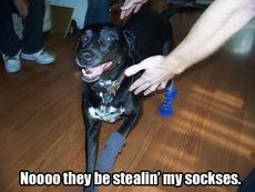 no they are stealing my socks