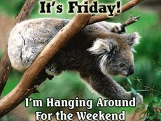 it's friday i'm hanging around for the weekend koala bear