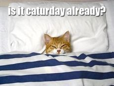 is it caturday already?