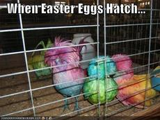 when easter eggs hatch