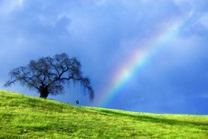 rainbow and tree
